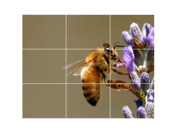 Golden Rule Of Thirds